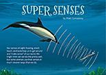 Super Senses cover.